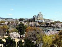 桜満開姫路城