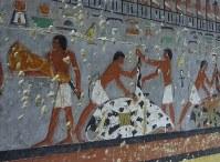 ウシを解体し、その肉を運ぶ人々を描いた壁画=エジプト北部サッカラで2019年4月13日、篠田航一撮影