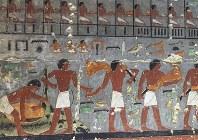 ウシを解体し、その肉を運ぶ人々の姿などを描いた壁画=エジプト北部サッカラで2019年4月13日、篠田航一撮影