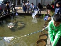 池の掃除をする5年生
