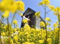 菜の花畑で結婚式を挙げ、笑顔で鐘を鳴らす夫婦=神戸市西区で、猪飼健史撮影