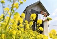 菜の花畑で結婚式を挙げる夫婦=神戸市西区で、猪飼健史撮影