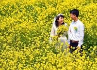 菜の花に囲まれて愛を誓う夫婦=神戸市西区で、猪飼健史撮影