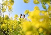 菜の花に囲まれて笑顔を見せる新郎新婦=神戸市西区で、猪飼健史撮影