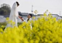 咲き誇る菜の花の前で永遠の愛を誓った=神戸市西区で、猪飼健史撮影