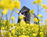 菜の花畑で結婚式を挙げ鐘を鳴らす夫婦=神戸市西区で、猪飼健史撮影