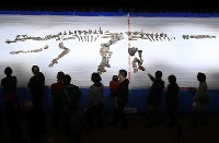 Visitors flock to the first public viewing on fossilized bones of the