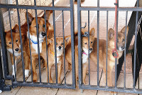 A group of the dogs is seen in their new home at Sakumonto Dog Run & Animal Rescue in Takaharu, Miyazaki Prefecture, on April 18, 2019. (Mainichi/Tsugio Shigeharu)