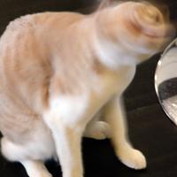 しーちゃんの猫ドリル=中嶋真希撮影