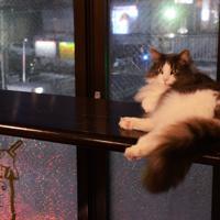 窓際のカウンターが、かんちゃんの定位置=中嶋真希撮影