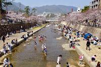 「お花見」=兵庫県芦屋市の芦屋川で、写真家・長島義明