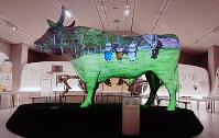 巨大な牛の造形物に映写されるプロジェクションマッピング=兵庫県新温泉町丹土の県立但馬牧場公園で、谷田朋美撮影