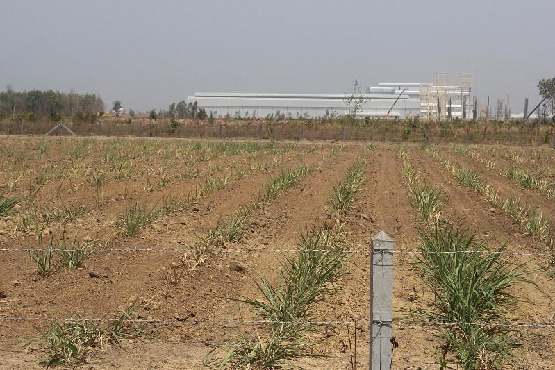 サコンナコン県に建設中の製糖工場・バイオマス発電所(後方)とサトウキビ園 (NNA撮影)
