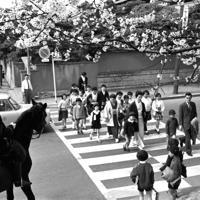 桜の門をくぐって登校する新入生。子供たちを騎馬警官が見守る=港区の青南小学校前で1964年4月