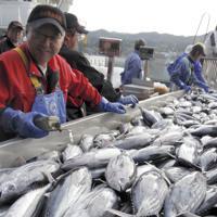 今季初めて水揚げされたカツオ=宮城県気仙沼市の気仙沼漁港で