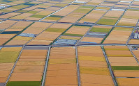 収穫の季節を迎えた麦畑がパッチワーク模様を描く初夏の佐賀平野=佐賀市川副町で2019年5月14日午後1時38分、本社ヘリから上入来尚撮影