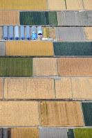 収穫の季節を迎えた麦畑がパッチワーク模様を描く初夏の佐賀平野=佐賀市川副町で2019年5月14日午後1時41分、本社ヘリから上入来尚撮影