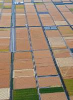 収穫の季節を迎えた麦畑がパッチワーク模様を描く初夏の佐賀平野=佐賀市川副町で2019年5月14日午後1時39分、本社ヘリから上入来尚撮影