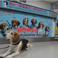 検疫探知犬を写真で紹介し、肉製品の検査を呼び掛けている=成田空港で、中村宰和撮影