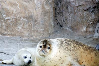 母親とたわむれる「だいず」(左)=旭山動物園提供