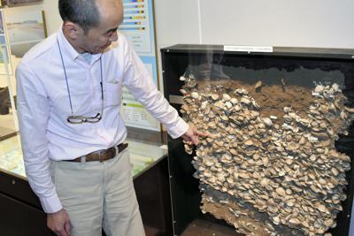 貝塚の堆積状態が一目で分かる「貝層の剥ぎ取り断面」。堆積物には土器の一部も含まれている=茨城県美浦村土浦の美浦村文化財センターで