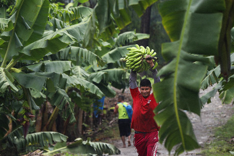 A worker carries a bunch of harvested bananas to be exported, at a farm in Ciudad Hidalgo, Chiapas state, Mexico, Friday, May 31 2019. If the tariffs threatened by United States President Donald Trump on Thursday were to take effect, Americans may see higher prices in grocery stores. The U.S. imports $12 billion of fresh fruits and vegetables from Mexico. (AP Photo/Marco Ugarte)