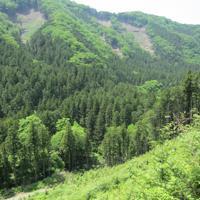 一部が伐採された森林=栃木県日光市で2018年5月、寺田剛撮影