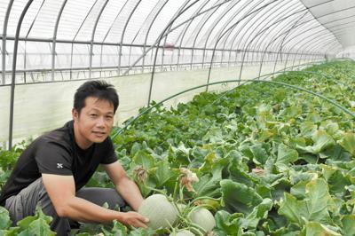 メロンを栽培する根崎直喜さん=いずれも茨城県鉾田市で