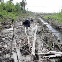 木が倒され、泥炭湿地の水を抜く排水路が掘られていたジュルンブン付近の森=2012年1月、環境NGO「ウータン・森と生活を考える会」提供