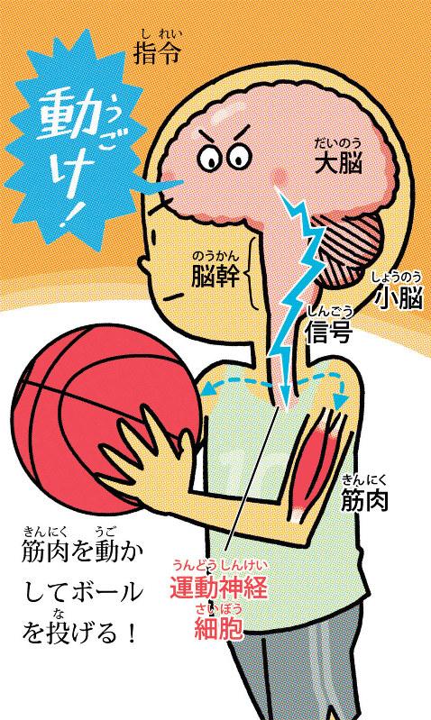 疑問氷解:運動神経って何? 目に見える? | 毎日新聞