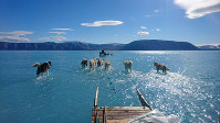 In this photo taken on June 13, 2019, sled dogs make their way in northwest Greenland with their paws in melted ice water. (Danmarks Meteorologiske Institut/Steffen M. Olsen via AP)
