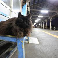 ベンチに座るおさむ=2018年6月6日、おらが湊鉄道応援団提供