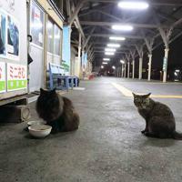 ホームに座るおさむ(左)とミニさむ=2018年6月6日、おらが湊鉄道応援団提供