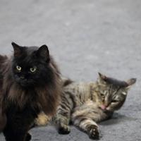 ホームに座るおさむ(左)とミニさむ=2018年8月21日、おらが湊鉄道応援団提供