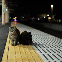 ホームに座るおさむとミニさむ(左)=2018年10月6日、おらが湊鉄道応援団提供