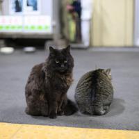 ホームに座るおさむとミニさむ(右)=2018年11月17日、おらが湊鉄道応援団提供