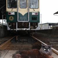 試運転を開始したひたちなか海浜鉄道の車両前に座る駅猫おさむ。震災で不通となった時も観光客を呼び込む原動力となっていた=茨城県の那珂湊駅で2011年6月15日、米田堅持撮影