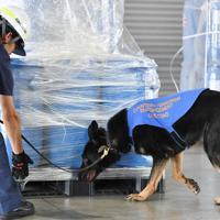 大阪港に着いた荷物を検査する爆発物探知犬「アイゼン号」=大阪市住之江区で2019年6月20日、木葉健二撮影