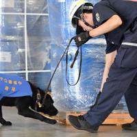 大阪港に着いた荷物を検査する麻薬探知犬「ノアール号」=大阪市住之江区で2019年6月20日、木葉健二撮影