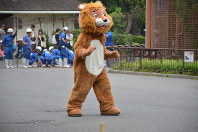 A costumed lion takes part in an escape drill at Tobe Zoological Park in Ehime Prefecture on June 22, 2019. (Mainichi/Ryoko Kijima)