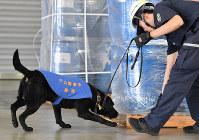 Drug detector dog Noir sniffs a shipment arriving at Osaka Port in Osaka's Suminoe Ward on June 20, 2019. (Mainichi/Kenji Konoha)