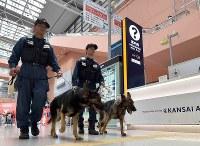 Osaka Prefectural Police security dogs JJ, right, and Reon patrol a terminal building at Kansai International Airport in southern Osaka Prefecture on June 14, 2019. (Mainichi/Yoshiyuki Hirakawa)