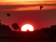 Birds fly by as the sun rises in Frankfurt, Germany, on June 24, 2019. (AP Photo/Michael Probst)