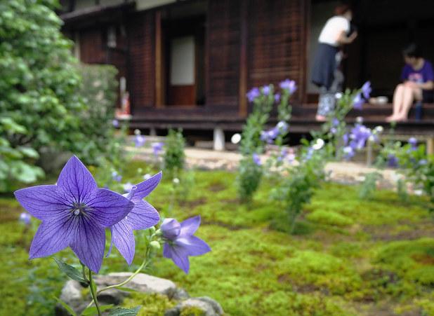 特別拝観:縁側で桔梗眺めよう 東山・天得院 /京都 - 毎日新聞