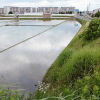 条里区画の痕跡とみられる水田の形は奈良盆地の農村風景の特徴だった。基準線となったのが下ツ道(右)=奈良県大和郡山市で、栗栖健撮影