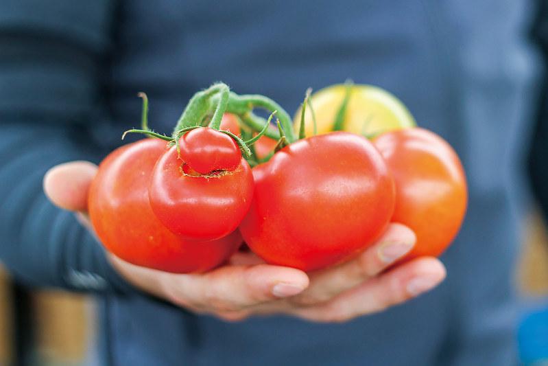 市場で値がつかなかった形の悪い野菜(インパーフェクト社提供)