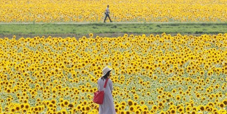 Japan Photo Journal: Shining for summer