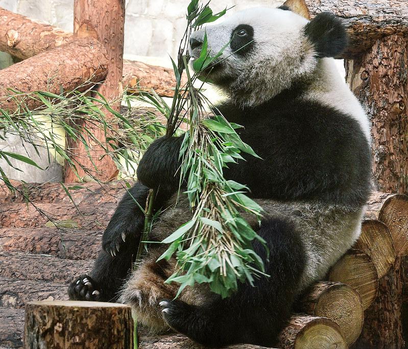 パンダの様子はインターネットライブで配信もされている
