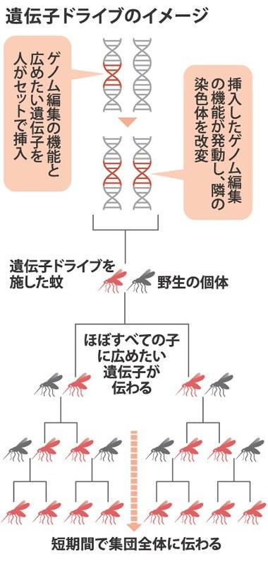 系 生態 が 蚊 絶滅