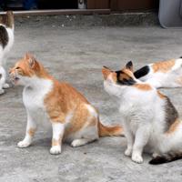 港近くに集まった猫。以前と比べ、姿はまばらだ=北九州市小倉北区の馬島で2019年7月9日午前11時4分、津島史人撮影